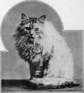 Cat-Mrs-Balring-s-Silver-Lambkin.jpg